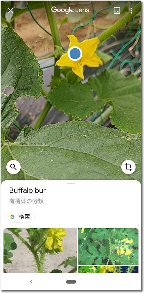 googlelens001.jpg