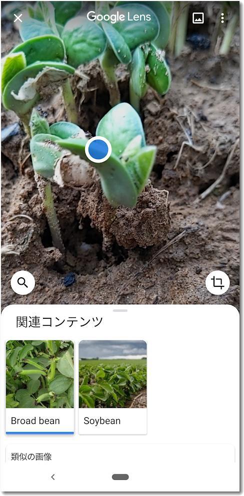 googlelens004.jpg