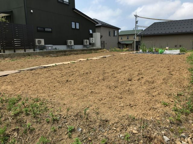 マメジンの畑